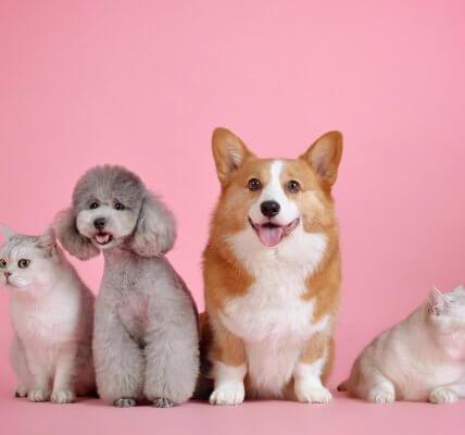 majtki dla psa